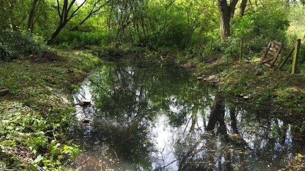 sensitive wetland habitat